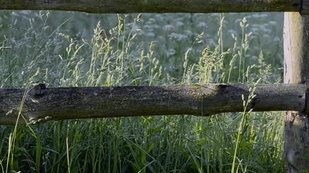 Wooden fence and grass on the meadow in the village in the morning. The video camera moves along the fence.