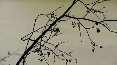 silhouette of a branch of an alder tree against a background of water. Countryside in the summer season.