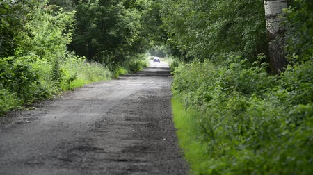 old road in a wooded area. Countryside in the summer season. Dostupné videozáznamy