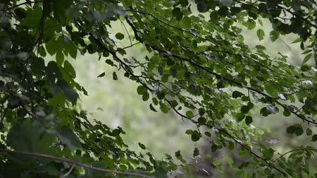 silhouettes of the leaves of trees waving in the forest. Countryside in the summer season.