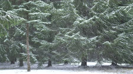 Heavy snow in the forest, snowy weather in the wood 4K Stockvideo