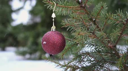 장식하다 : Christmas bauble hanging on snowy fir tree slow motion HD