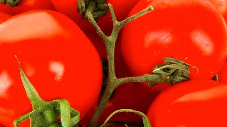 rajčata : fresh tomatoes on green branch in wicker basket 1920x1080 intro motion slow hidef hd Dostupné videozáznamy