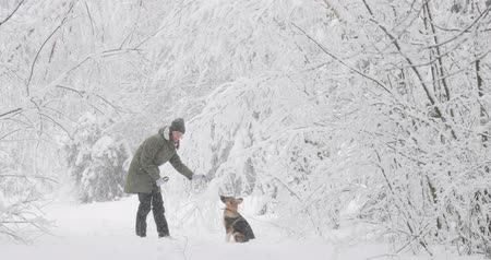 závěj : Young Beautiful Caucasian Girl Woman Dressed In Jacket Playing Wiht Puppy Of Mixed Breed Dog In Winter Forest In Snowy Day Dostupné videozáznamy