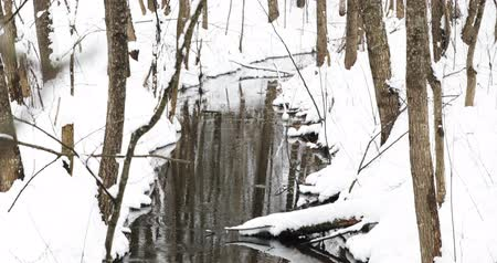 подход : Stream In Winter Forest. Flow Of Melt Water Among Snow. Approach Of Spring In European Nature Стоковые видеозаписи