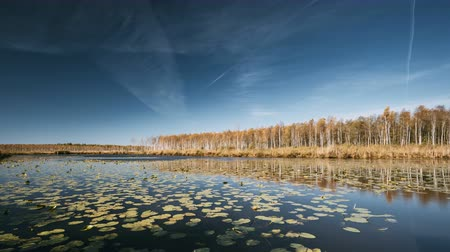 reserva : Berezinsky, Biosphere Reserve, Belarus. Autumn Landscape With Lake Pond River And Beautiful Birch Forest On Another Riverside. Trees Woods With Yellow And Oranges Colours Foliage In Sunny Day In Autumn Season