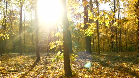 worms eye view : Autumn leaves wood sun