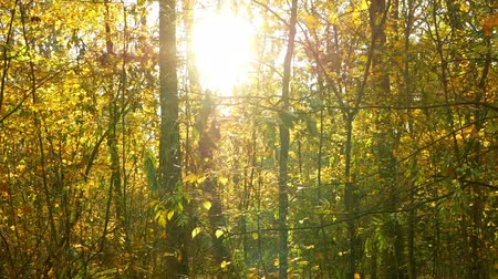 worms eye view : Autumn leaves forest sun