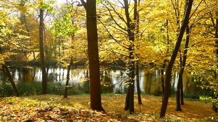 dzsungel : Autumn forest lake sun