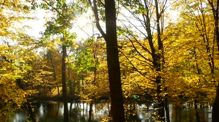 parky : Sunbeams forest autumn