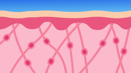 camadas : collagen in younger skin and aging graphic