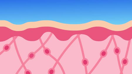 dermatologia : collagen in younger skin and aging graphic