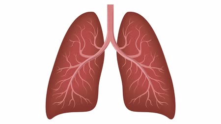 good and smoker lung graphic animation