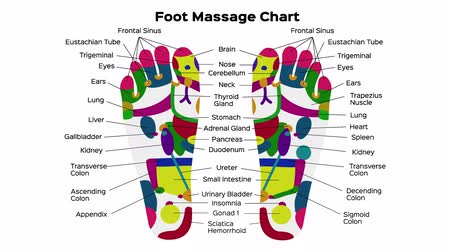 описание : Foot reflexology chart with accurate description of the corresponding internal organs and body parts. Vector illustration on black background. anatomy  graphic animation