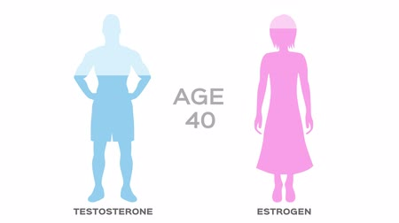 testosterone and estrogen hormone level  age  graphic animation