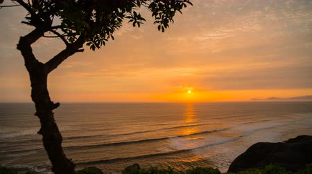 Evening timelapse from Lima, Peru with one tree and Pacific ocean in a scene