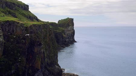 Many seabirds flying above the huge cliff in slow motion. Panoramic and close-up scenes of Harp Rock at Lunga Island, Scotland, a nesting place for thousands of birds, including atlantic puffins.