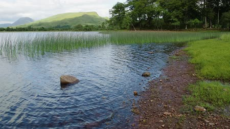 rákos : Waves and coastal wetland of Loch Awe near the Kilchurn Castle in Scotland. Mountains and trees are visible in the background. Green grass in the water. Shot on a summer day in slow motion.