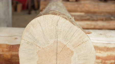 log cabin : Background: wooden logs in the future house. Close-up and moving camera