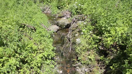 Small rivulet in the woods Stock Footage