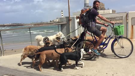 dog sitter : Doggy sitter on bycicle