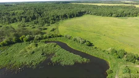 Aerial video shooting of a large meadow near a dark lake. The camera slowly goes down. In the distance, a horse runs by. Стоковые видеозаписи