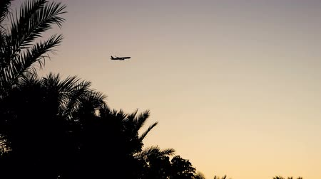 arrive : The plane flies over the leaves of the palm tree in the sky and then disappears from the frame. Silhouettes of air transport at sunset.