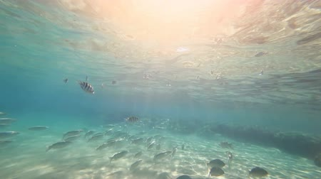 Underwater shooting. Large number of different fish float at the bottom of the sea. The rays of the sun fall into the lens through the thickness of the water.