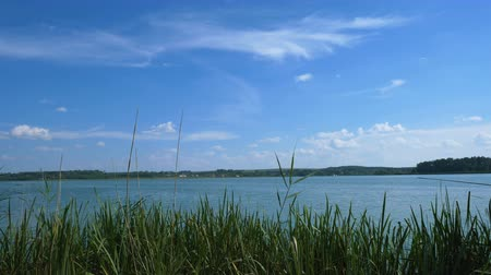 View through the reeds on a large lake over which the blue sky. Natural landscape.