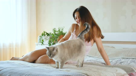 meg nem született : Pregnant girl playing with a cat. Woman strokes pet. Cat on the bed near her mistress. Stock mozgókép