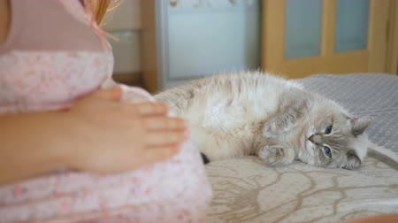 A pet looks in surprise at the big belly of its mistress. Pregnant young woman next to a cat. The animal falls asleep on the bed near the woman. Stock mozgókép