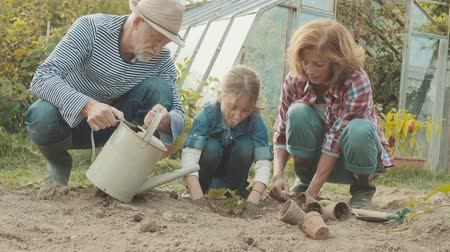 locsolás : Senior couple with grandaughter gardening in the backyard garden