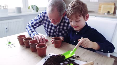 Senior grandfather with small grandson sowing seeds at home.