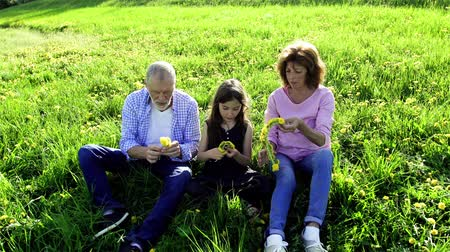 grandad : Senior couple with granddaughter outside in spring nature, making dandelion wreath.