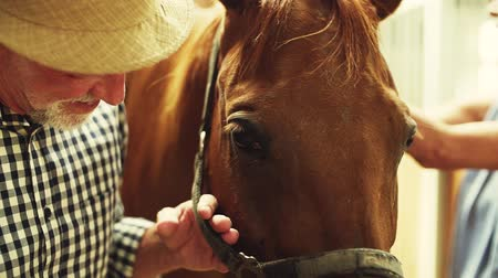 patting : A close-up of senior couple petting a horse in a stable.