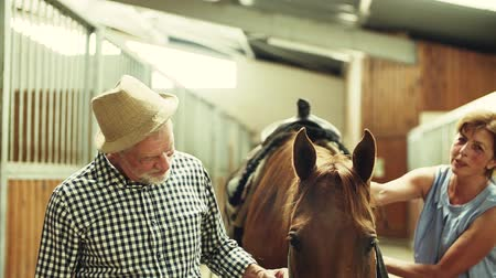 patting : A senior couple petting a horse in a stable.