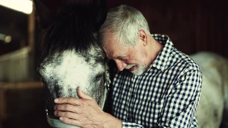 вести : A senior man standing close to a horse in a stable, holding it.