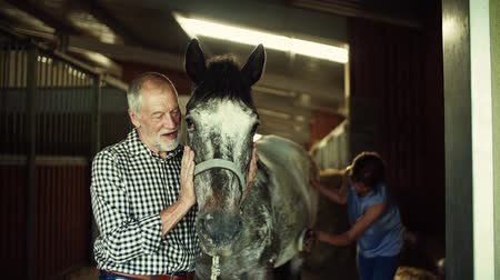 escovação : A senior couple petting a horse in a stable.