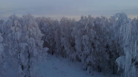 finlandiya : Frozen winter forest in the evening Stok Video