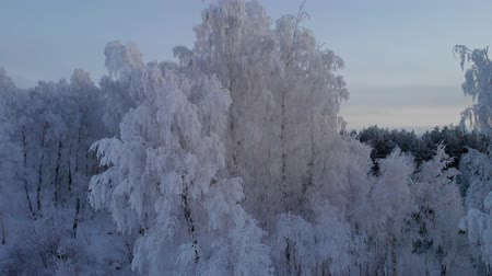 saflık : Frozen winter forest in the evening Stok Video