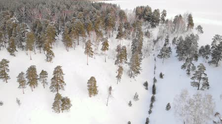 mais : Flying over winter fir trees
