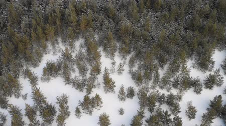 mais alto : Flying over winter fir trees
