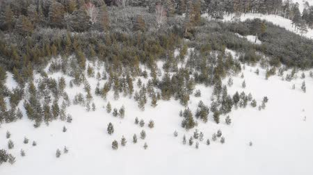 더 : Flying over winter fir trees