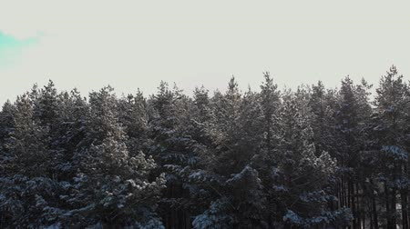 더 : Flying over the snowy tops of trees