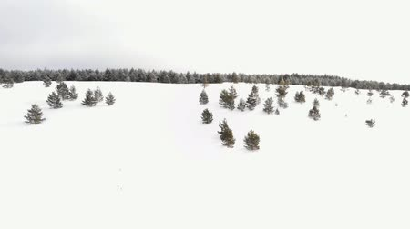 mais : Flying over the forest on a winter day Stock Footage
