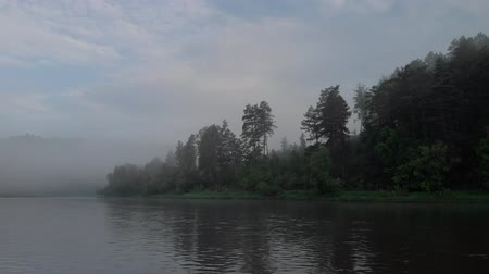 enevoado : Beautiful forest near the river in the fog
