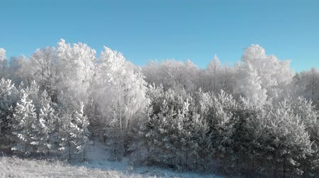 иней : View of a beautiful winter frosty forest, where the trees are all in white hoarfrost Стоковые видеозаписи