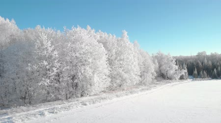 мороз : View of a beautiful winter frosty forest, where the trees are all in hoarfrost
