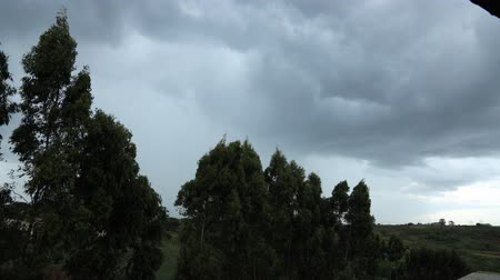 rüzgârlı : Time-lapse of wind through trees and passing clouds of an oncoming storm in rural Nairobi, Kenya. Stok Video