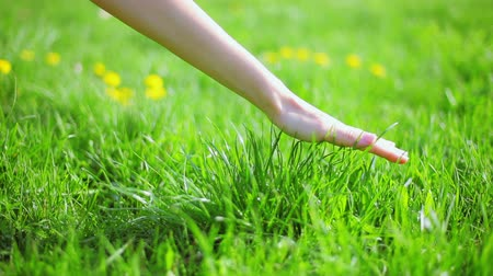 grassplot : Fresh new green grass caressed by woman hand, closeup view
